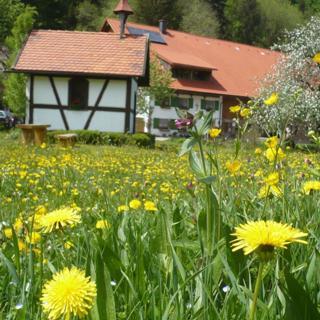 Biohof Schad - FW Gohrersberg/ 2 Schlafräume/ Dusche, Bad, WC - Biohof Schad - FW Gohrersberg/ 2 Schlafräume/ Dusche, Bad, WC
