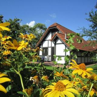 Ferienhaus Deichgraf 86 im Feriendorf Altes Land - Ferienhaus Deichgraf 86 max. 7 Personen - Hollern-Twielenfleth