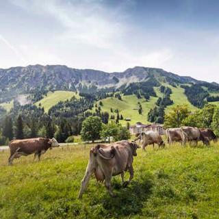 Alpin Lodge - Bergveilchen - für bis zu 4 Personen - Bad Hindelang